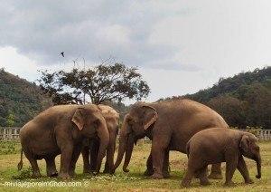 Montar elefante en Tailandia
