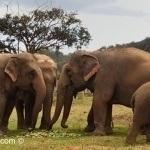 Paseo en elefante en Tailandia: Rompiendo espíritus