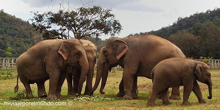 Elefantes_Fotor