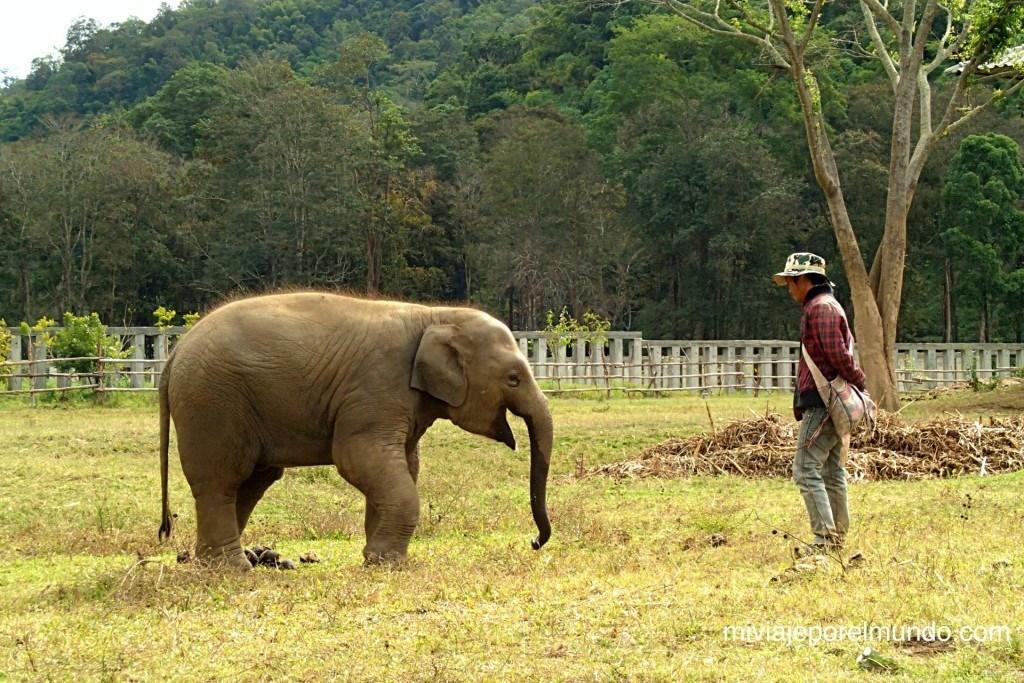 paseo de elefante en tailandia