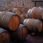 10 tips para disfrutar la fiesta de la vendimia en los viñedos de Querétaro