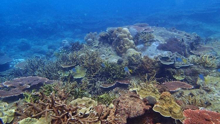 snorkel en la mejor playa del sudeste asiatico