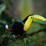 13 consejos que deberías saber antes de viajar a Costa Rica
