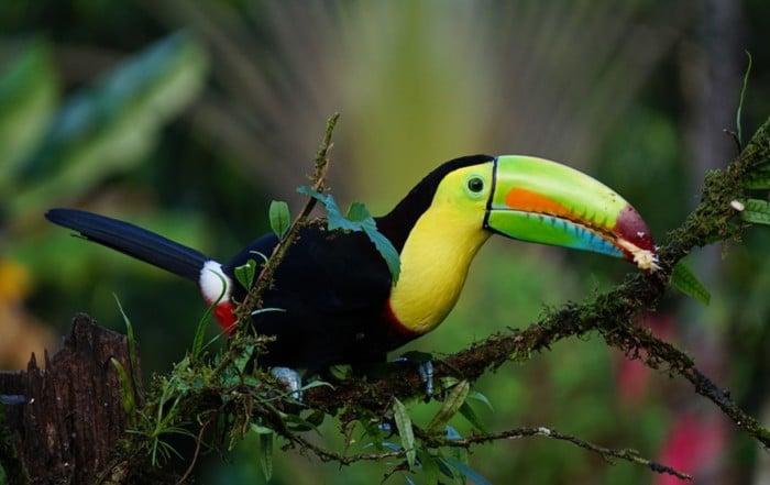 Ruta de 7 días por Costa Rica 2