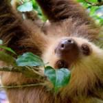 Qué ver en Costa Rica en 15 días