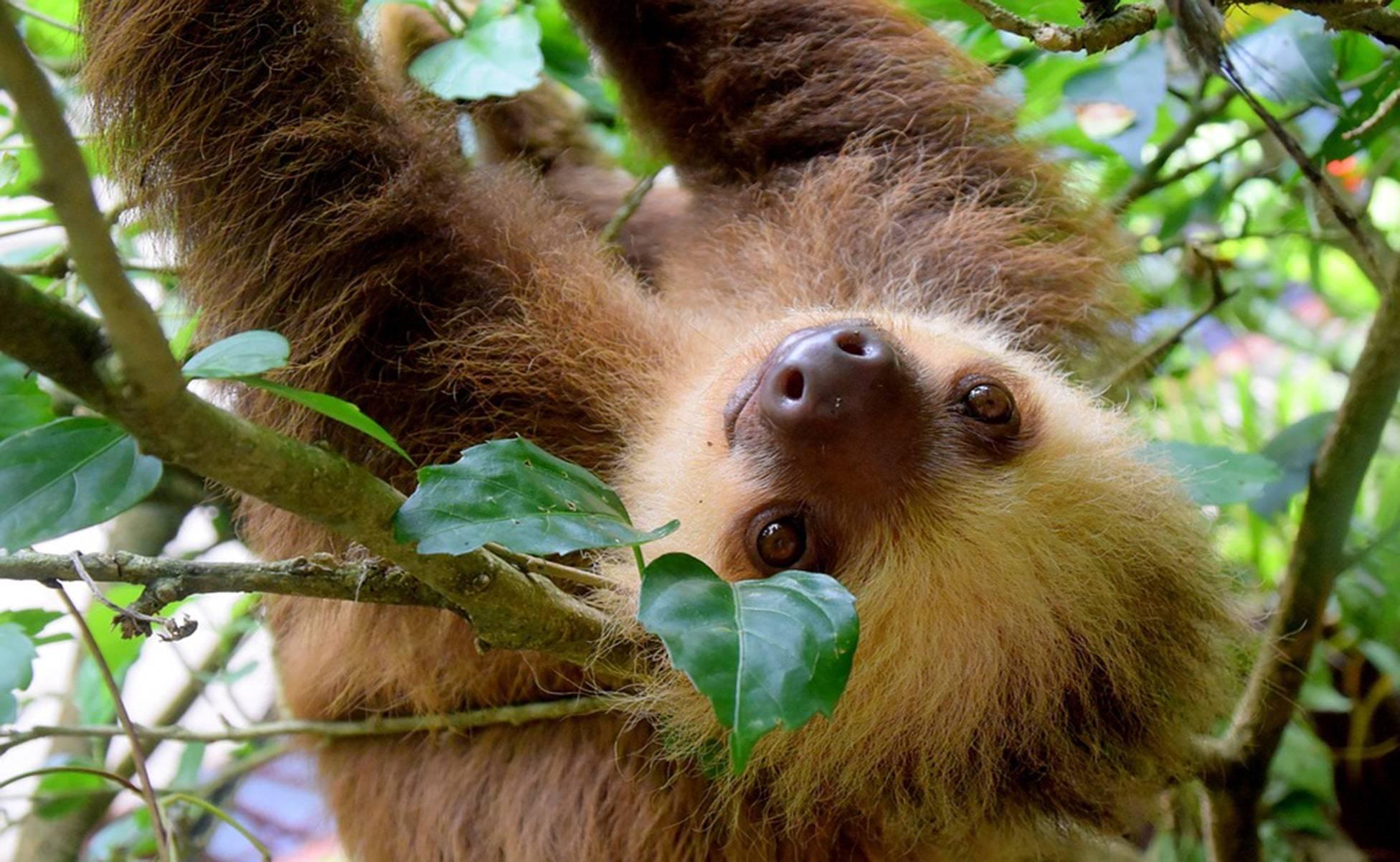 Cosas que hacer en Costa Rica con poco dinero 5